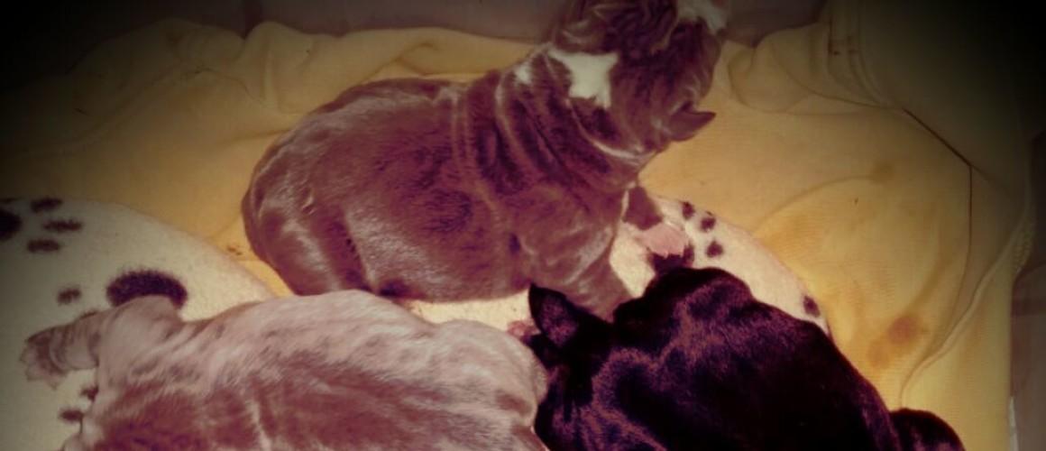Chanel and MoJo