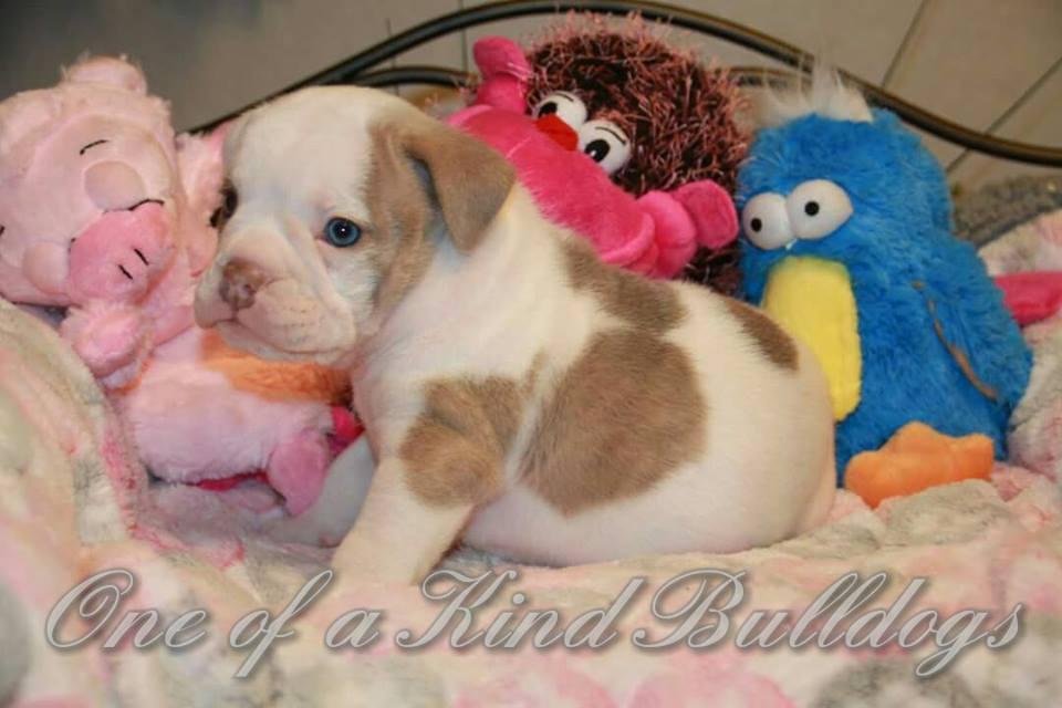 Molly and Django puppy